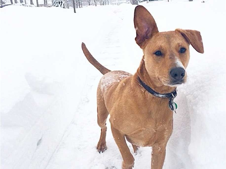 oswin rescued dog